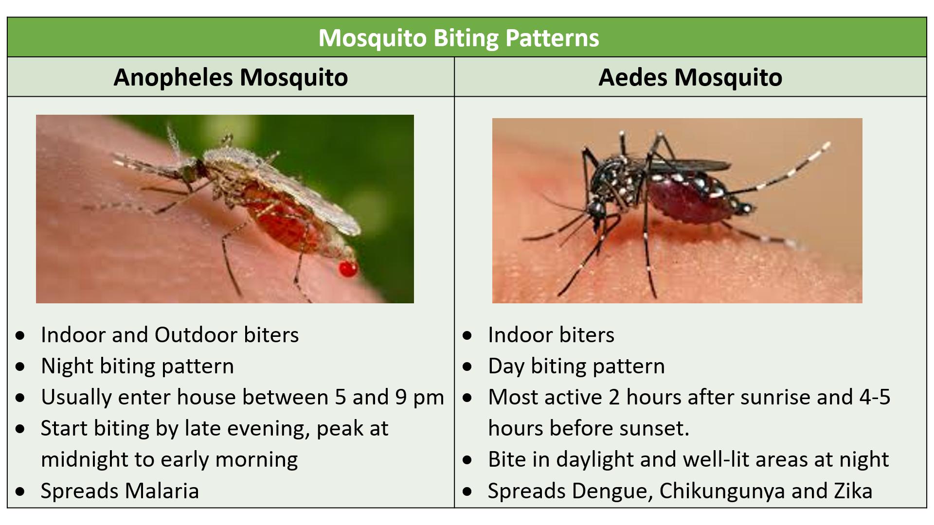 mosquito biting patterns